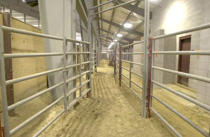 Livestock Holding and Return Alley